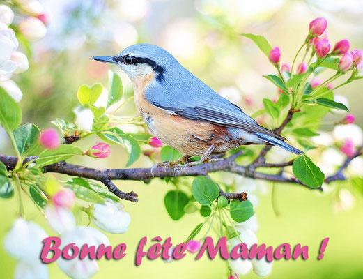 Fête des mères à l'oiseau