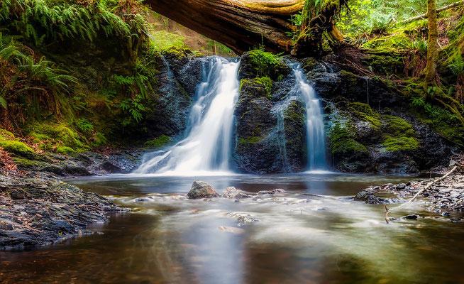 cascade forestière