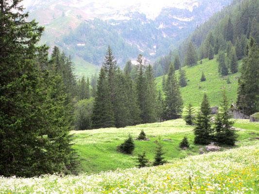 montagne printanière