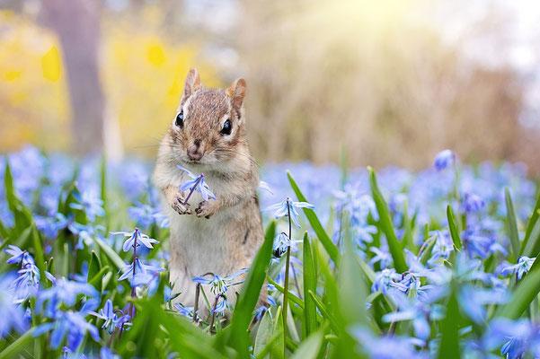 Ecureuil dans les fleurs