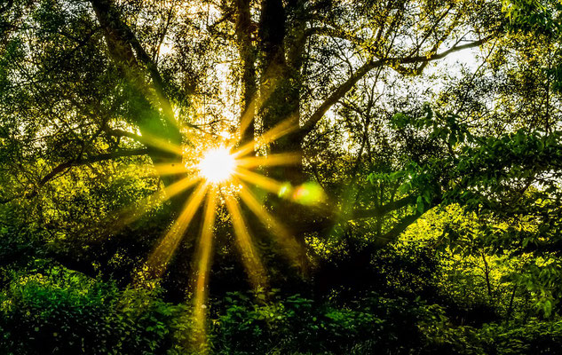 Soleil dans la nature