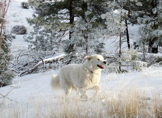 Le chien dans la neige