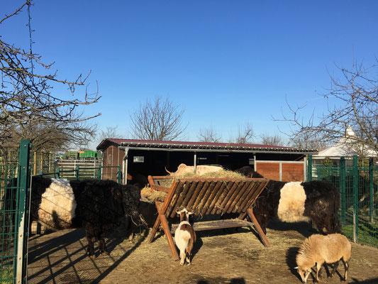 Streichelzoo und Tierfütterung