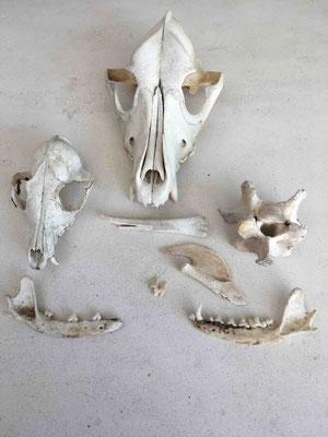 Sortation in matters of bones and skulls