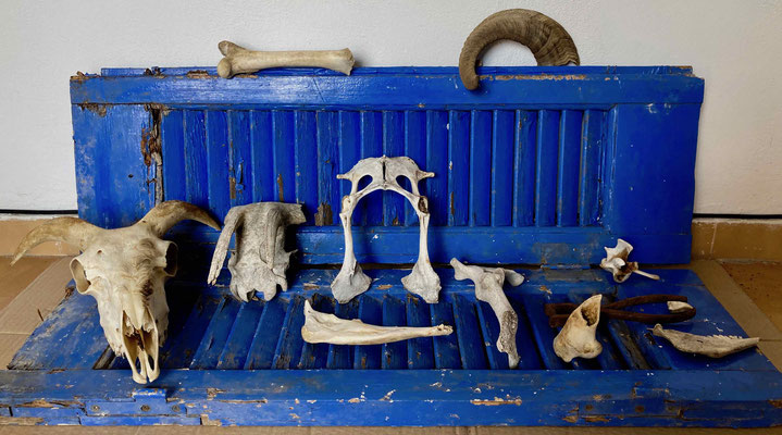 Final arrangement of the animalistic findings