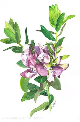 """Pflanzenstudie"" Aquarell 20x30cm"