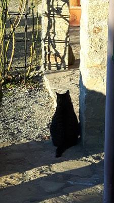 Alex sucht bereits den Schatten