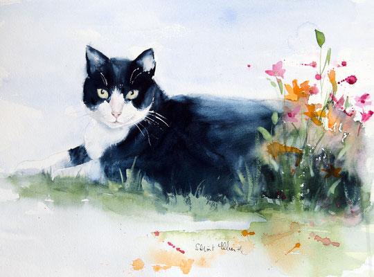 aquarelle de chat
