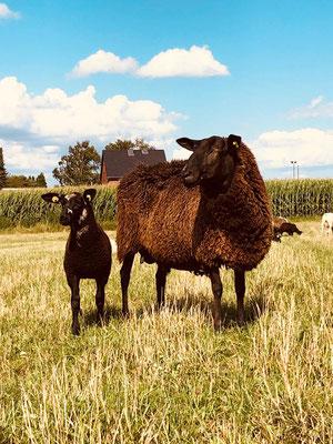 Bio Milchschafmutter mit Lamm