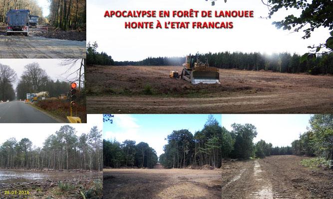 Une forêt sacrifiée par une poignée d'irresponsables et d'un état défaillant.