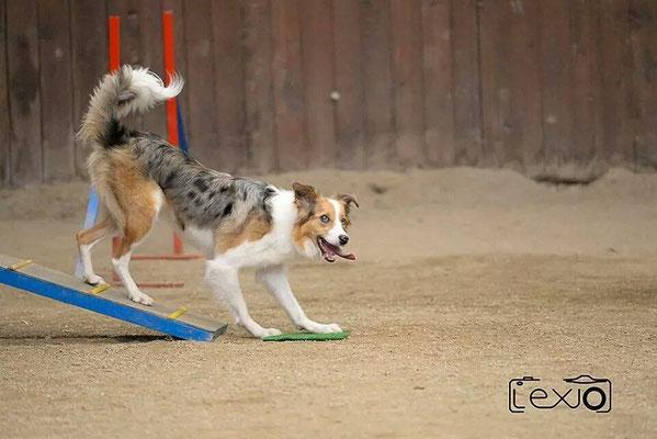 allenamento di agility