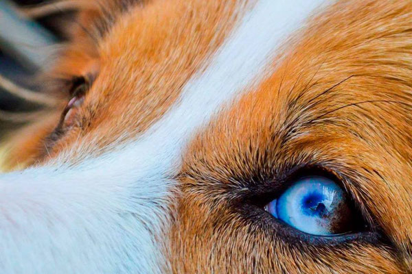 gli occhi più belli del mondo!