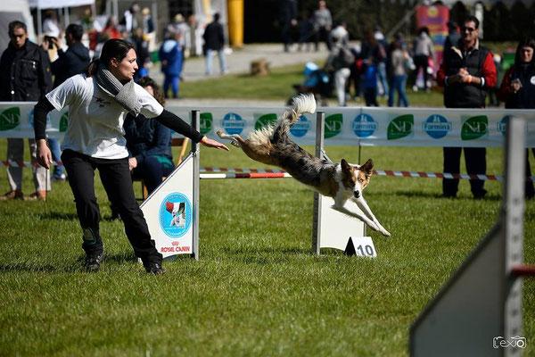 gara di agility dog