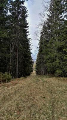 ...und wieder Wald,...