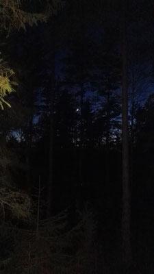 Über mir der Wald im Mondschein...
