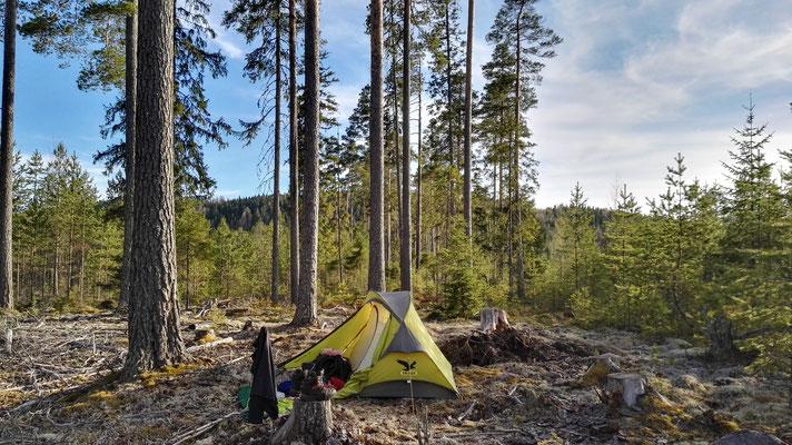Schlafplatz auf einer Rodung im Wald