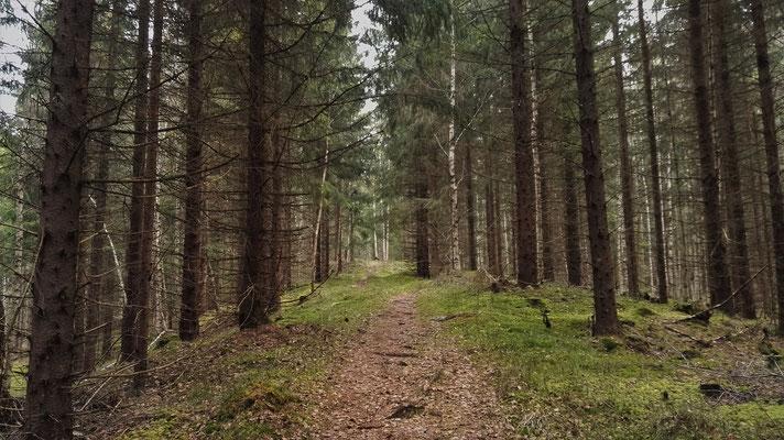 Durch Wald...