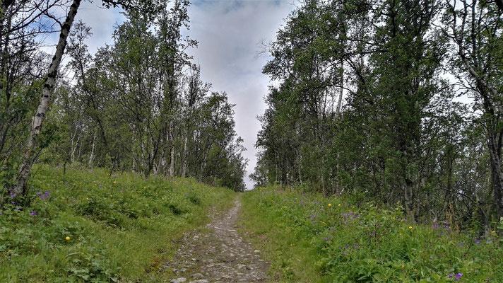 Dann wieder Wald und Wiese