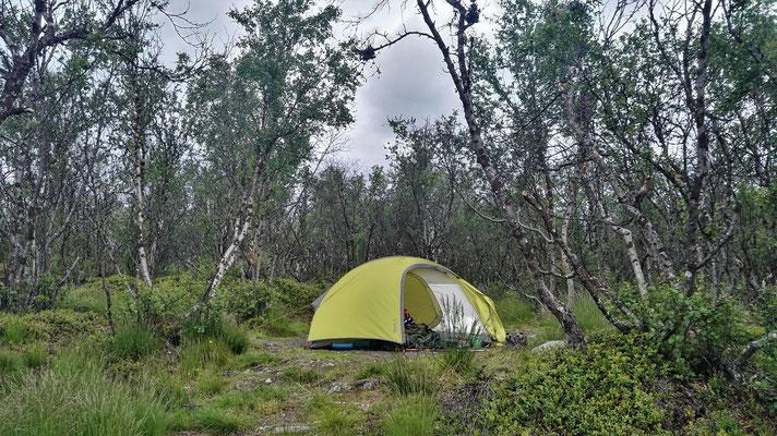 Mein Zelt im Birkenwald auf dem Zeltplatz der Abisko-Fjällstation