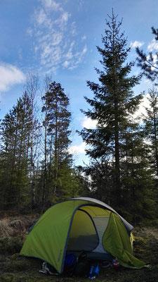 Abends zum Glück wieder mitten im Wald