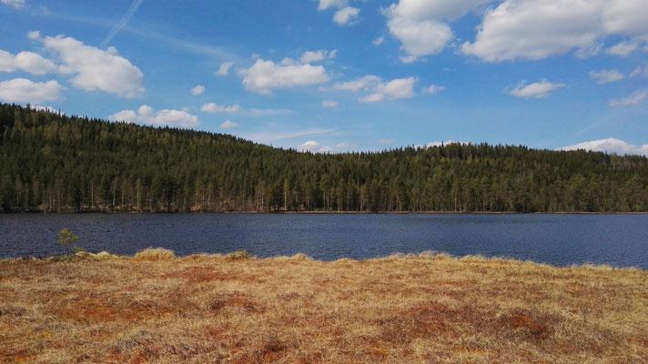 Ein Waldsee mit sumpfig schmatzendem Ufer