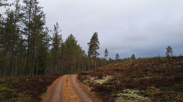...und wieder Wald