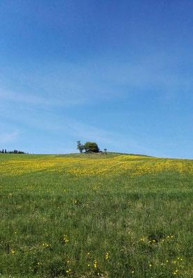 Lieblich hügelige Landschaft im Tal des Indalsälven: Der Frühling ist da!
