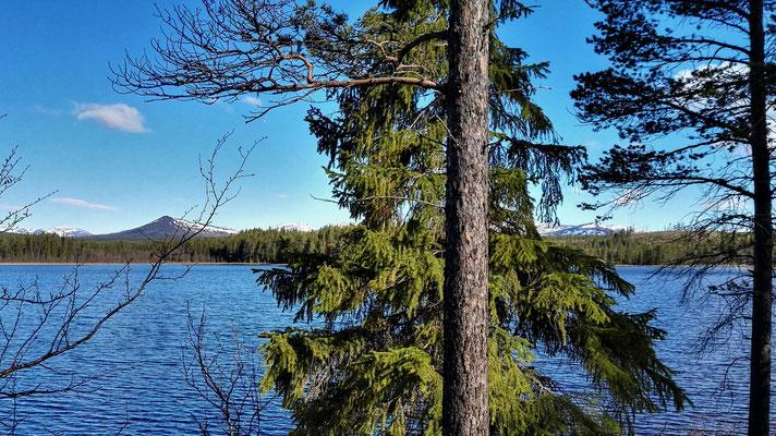 und immer wieder Wald und See