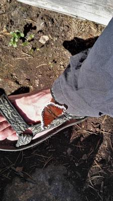 Nachmittags ein Schmetterling
