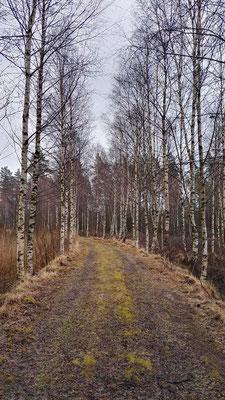Durch Smalands Wälder...