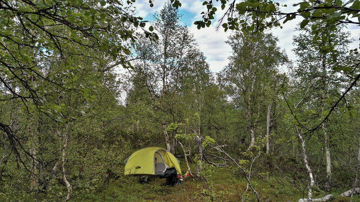 Schlafplatz im Birkenwald