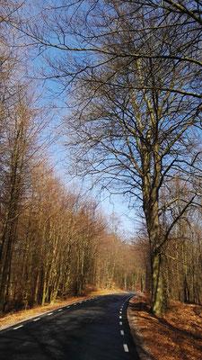 Kahler Buchenwald im Sonnenschein
