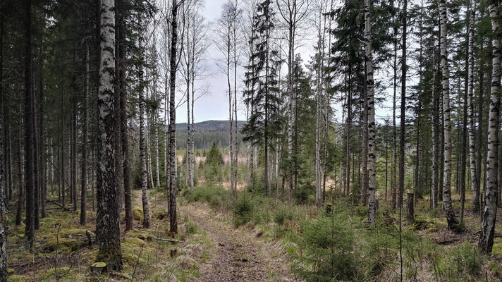Wald, Wald...