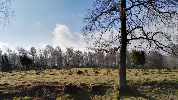 Naturreservat Hörby fälad