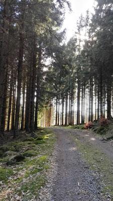 Forstwege durch den Wald