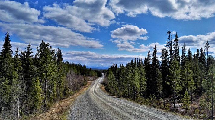 Diesen Forstweg hatte ich ganz für mich allein - 20 km und kein einziges Auto.