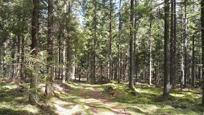 Immer noch Wald, aber heute mit etwas Sonne