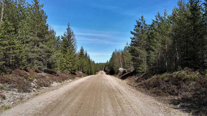 ...und manchmal auch auf Schotterpisten endlos durch den Wald
