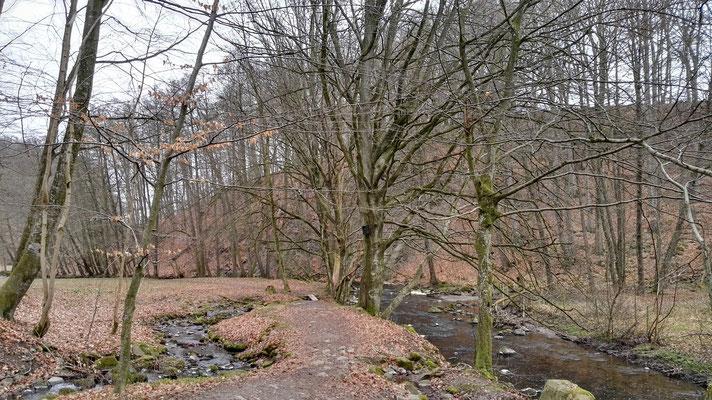 Skane im Frühjahr: Kahle Buchen und am Boden altes Herbstlaub.