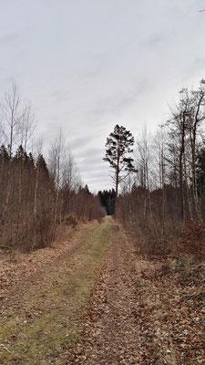 ...durch den Wald