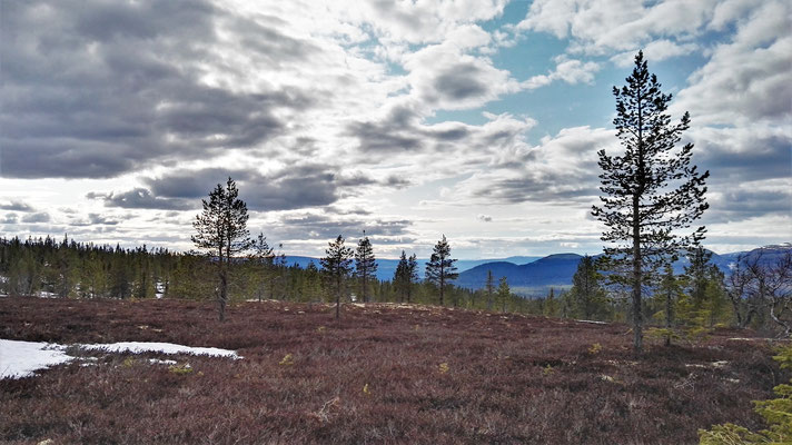 Und wieder Wald und Heide