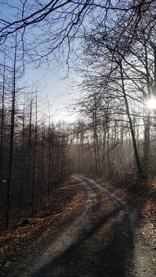 Mein Weg in der Morgensonne