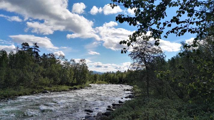 Dichter Birkenwald und manchmal ein Fluss...