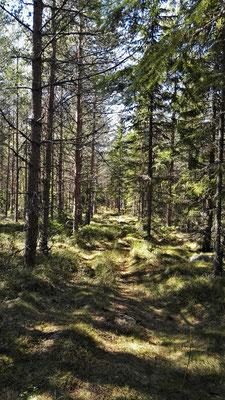 einsame Wege durch den Wald