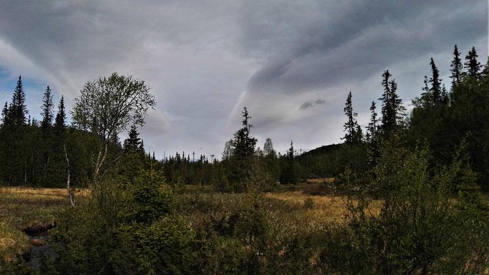 ...und Wald...