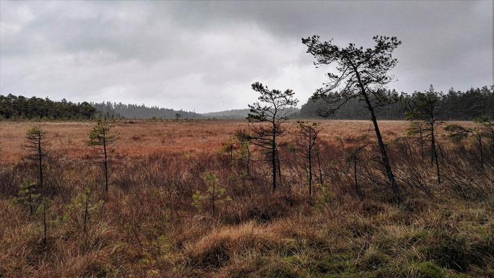 Das Naturreservat Rocken - Sumpf ohne Ende