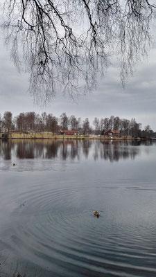 ...und schwimmend auf dem Getesjön. Im Hintergrund am anderen Ufer der Campingplatz von Markaryd