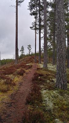 Auf einsamen Pfaden durch dunstigen Wald