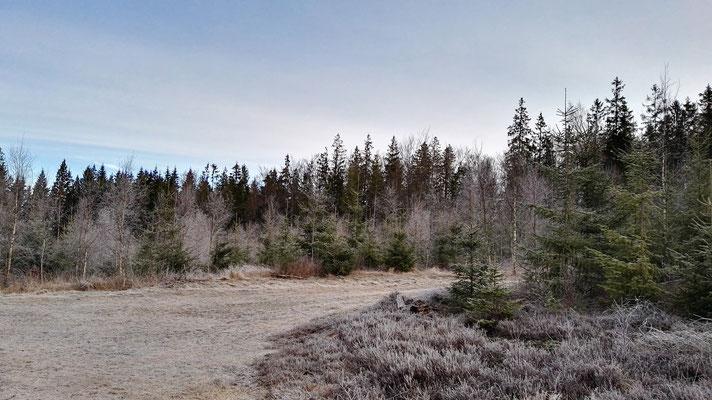 Bereifter Wald im Morgengrauen