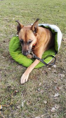 Bei der Kälte brauchen auch Hunde einen Schlafsack